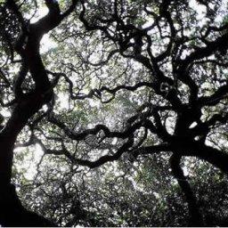 Under Milkwood, Dylan Thomas, Scranton, PA