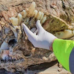huge-creature-missing-head-and-measuring-23ft-long-washes-up-on-beach