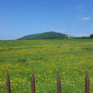 field_near_pwll_y_wrach.jpg