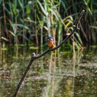 kingfisher 9