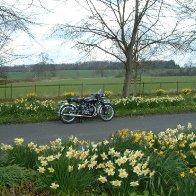 Daffodils & Shadow