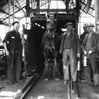 royal horse show entery 1938