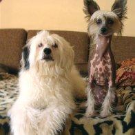 McCoy and Lulu