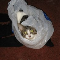 Nothing much to say right now...so here's a cat in a bag.