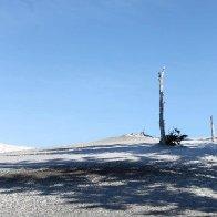 Stunted Tree - Mt Hood