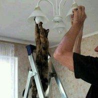 catlightbulb