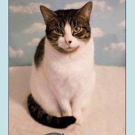 St Dwynwen's Cat