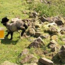 Photosheep Competition Group