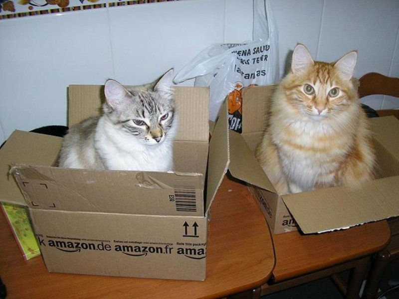 Andrews cats ( in boxes )