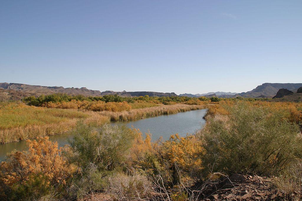 Bill_Williams_River_National_Wildlife_Refuge_2.jpg