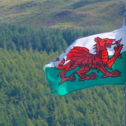 wales-is-building-a-national-forest-that-will-span-the-length-and-breadth-of-the-country